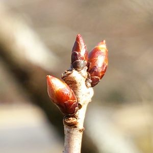 業務改革の基本ステップのイメージ:桜のつぼみ