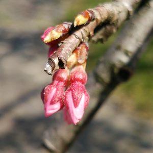 業務改革のメンバーを集めるステップのイメージ:つぼみが開き始めていずれ花が咲く予感