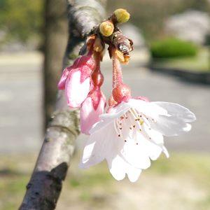 業務改革の志を一つにするステップのイメージ:志を合わせると花が開いたような気分になる